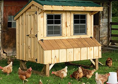 Quaker coop with pine siding and metal roof